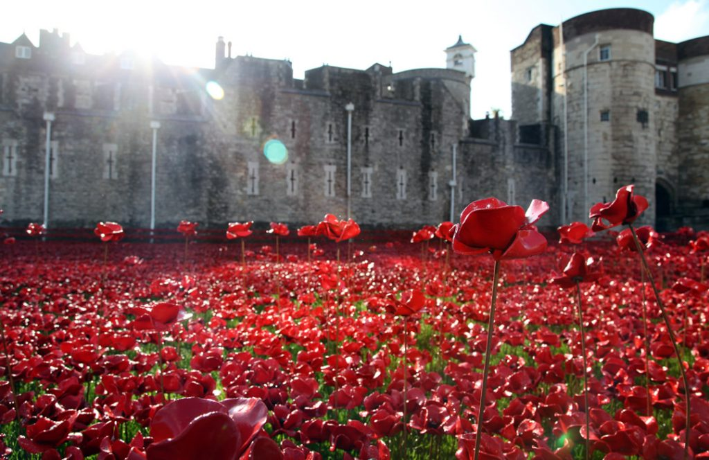 Poppies in the morning, image © John Shevlin and Historic Royal Palaces, 2nd September 2014.